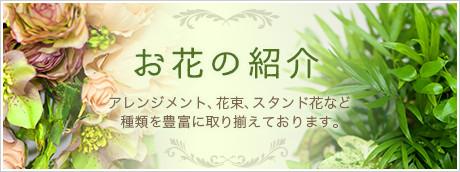 お花の紹介
